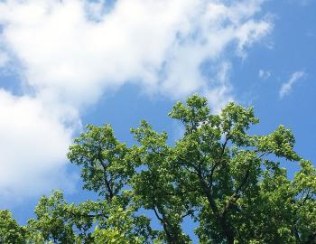 view of the trees from underneath blue sky above