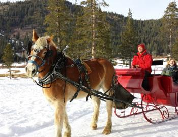 horse with carriage in the snow