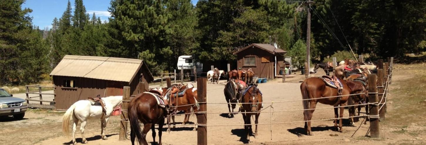 horses at the stables